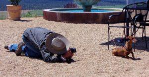 Djurfotografering